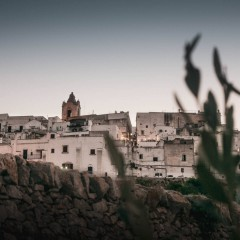 Ostuni, queen of the olive trees
